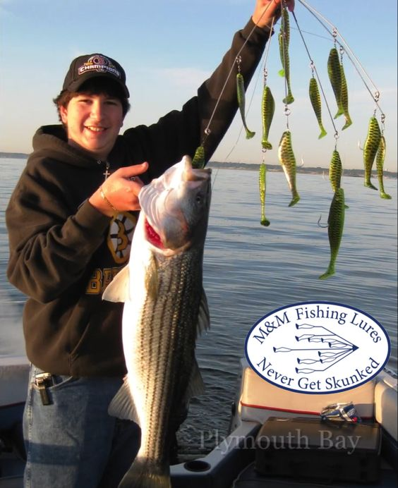 32 tiger stripe umbrella rig stripes bass and rigs for When is the best time to fish for bass
