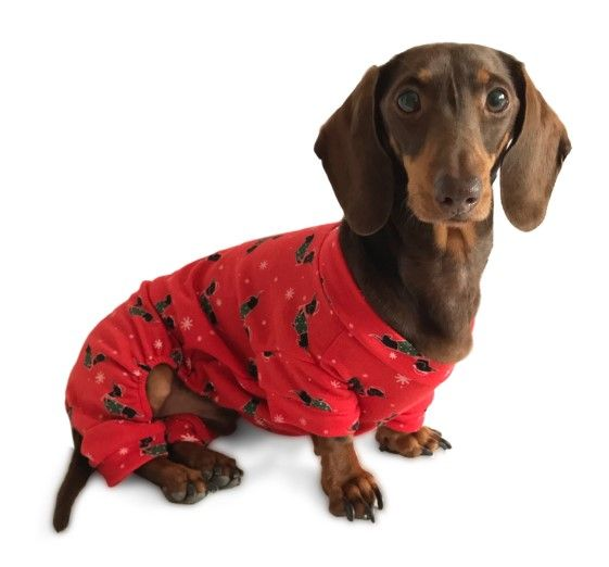Dachshund Clothes That Actually Fit Dachshund Clothes Dachshund