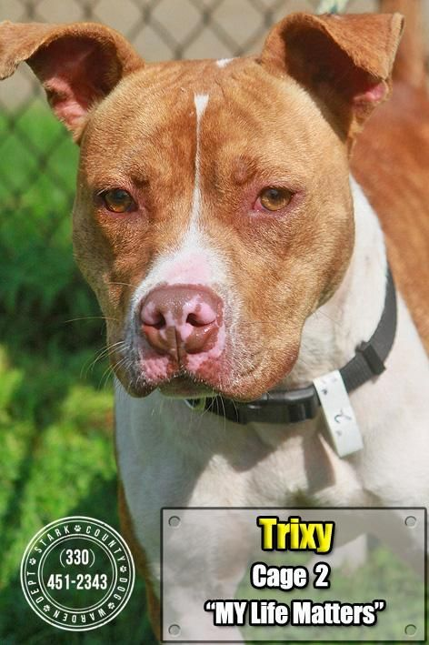 Meet 02 Trixy, an adoptable Pit Bull Terrier looking for a forever home. If you're looking for a new pet to adopt or want information on how to get involved with adoptable pets, Petfinder.com is a great resource.