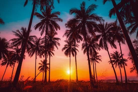 Coconut Palm Trees On Beach At Sunset Canvas Wall Art Picture Print