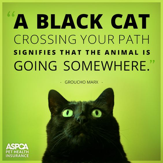 In most cultures, black cats are a sign of good luck.: