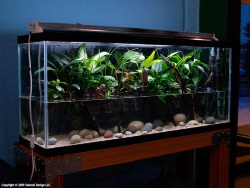 ... 200 gallon fish tank fish tanks hedges trellis fish plants tanks