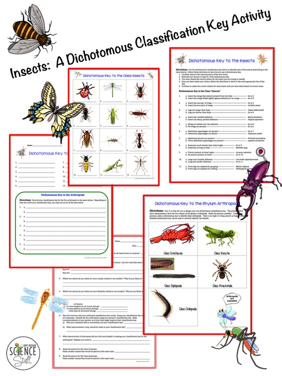 Insects and Arthropods Dichotomous Key Activity