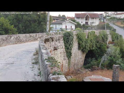 Portugues Ponte Romana Flores Vila Real Portugal 2018julho English Roman Bridge Flores Vila Real Portugal 2018july Franc Vila Portugal Ponte