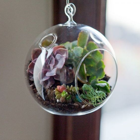 terrarium nos id es pour le faire soi m me minis. Black Bedroom Furniture Sets. Home Design Ideas