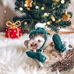 Mr.Pokee the Hedgehog (@mr.pokee) • Фото и видео в Instagram