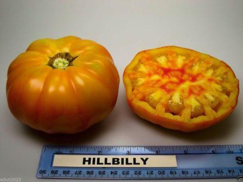 Beefsteak Heirloom Tomato,Hillbilly,-50 Seeds-Great for Sandwiches&salads