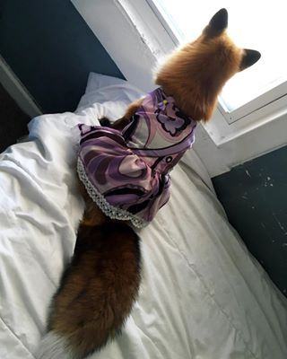 She's a fashionista. | Community Post: 19 Reasons You Need To Follow Juniper The Fox On Instagram