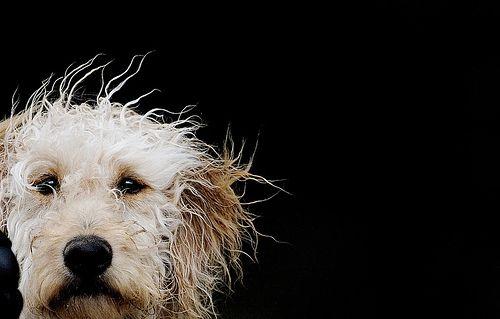 Bad hair day....