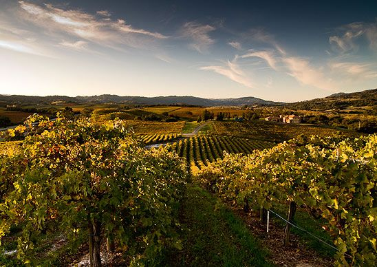 A vineyard in Cloverdale, Calif. (Courtesy dbienkowski/myBudgetTravel) From: Coolest Small Towns in America. Click on the photo to nominate your favorite small town for 2014's contest!