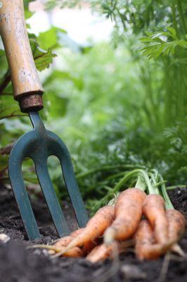 Grow some veggies!