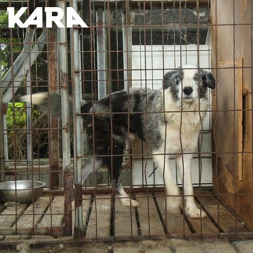 Kara Uijeongbu South Korea Dog Trainer Animal Cruelty Case 072320 Rescue Of 8 Dogs In 2020 Dog Trainer Animal Shelter Rescue Dogs