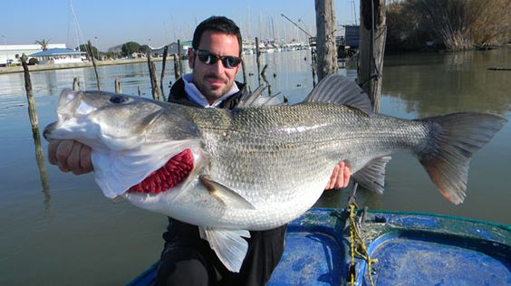 Huge sea bass in italy for Cheap bass fishing tackle