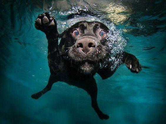 dog nadando