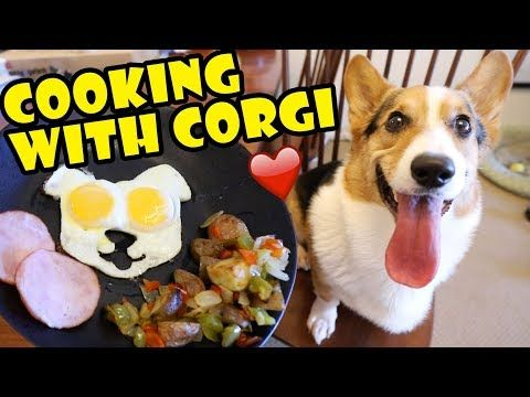 10 Cooking With Corgi Dog Tasty Fall Recipes Life After