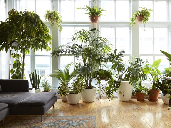 These plants were born to be city dwellers. Perfect plants for apartment living: low light, low water, low maintenance.