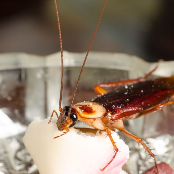 Pests are Unwelcome Guests at Your Restaurant Ecoshield Blog - silberfische in der k che