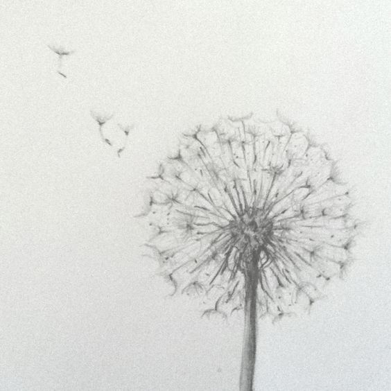 how to draw a dandelion flower