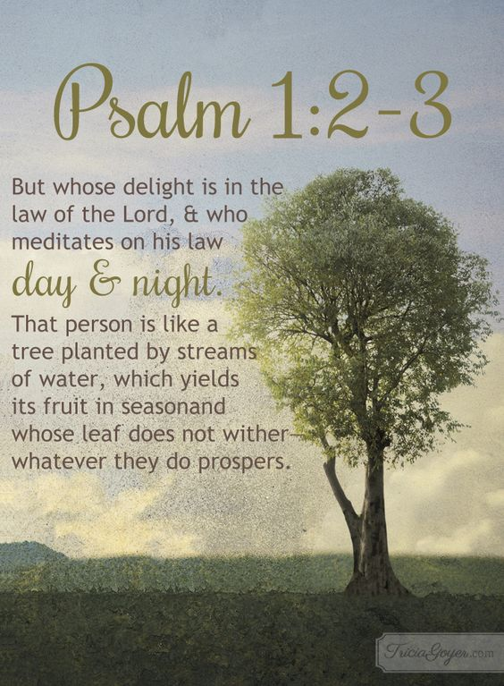 Psalm 1:2-3 (ESV) ~~ but his delight is in the law of the Lord, and on his law he meditates day and night. He is like a tree planted by streams of water that yields its fruit in its season, and its leaf does not wither. In all that he does, he prospers.  ~~ Meditate on God's Word | Psalm 1:2-3