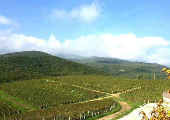 Kir-Yianni Winery, Naoussa: Where the noble indigenous red grape, Xinomavro is king | spaswinefood