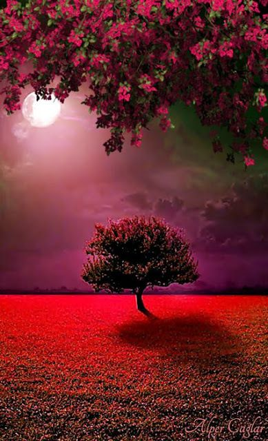 Discovered By Daniele L Find Images And Videos About Nature Red And Moon In 2021 Landscape Photography Nature Beautiful Landscape Wallpaper Wallpaper Nature Flowers Beautiful scenery wallpaper photo