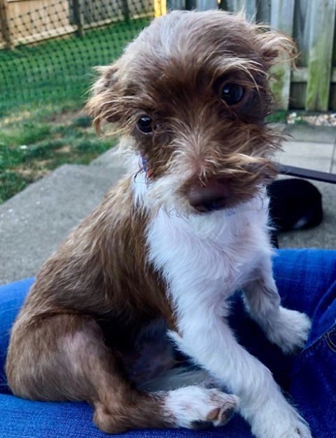 Adopt Emmitt On Terrier Mix Terrier Mix Dogs Pet Finder