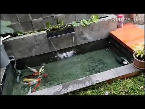 Kolam Ikan Koi Buatan Sendiri Youtube Kolam Ikan Koi Kolam Ikan Kolam