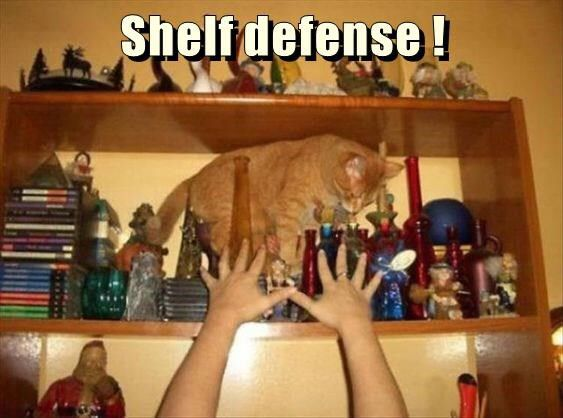 Shelf defense ! http://cheezburger.com/9111530240