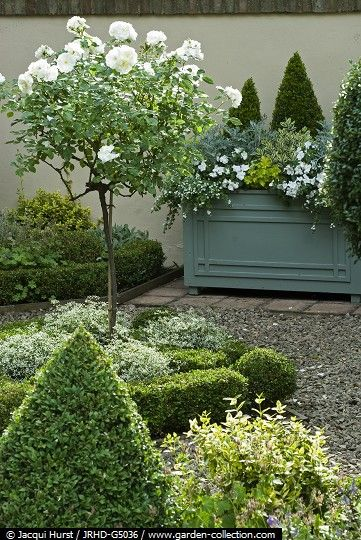 formal boxwood & white standard roses:
