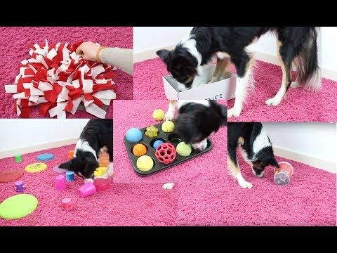 Hundespielzeug selber machen Kreative Ideen mit Anleitung