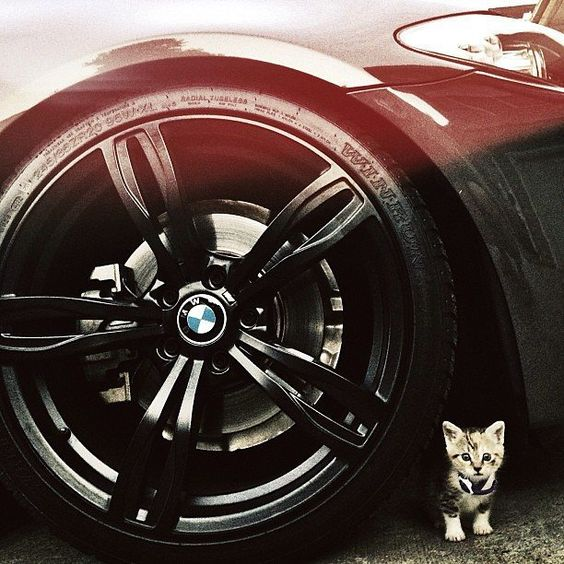 Purr-formance so mighty, you could feel quite small. An overwhelmed #BMWrepost via @vberkov #BMW #5series #caturday #cat #catsofinstagram