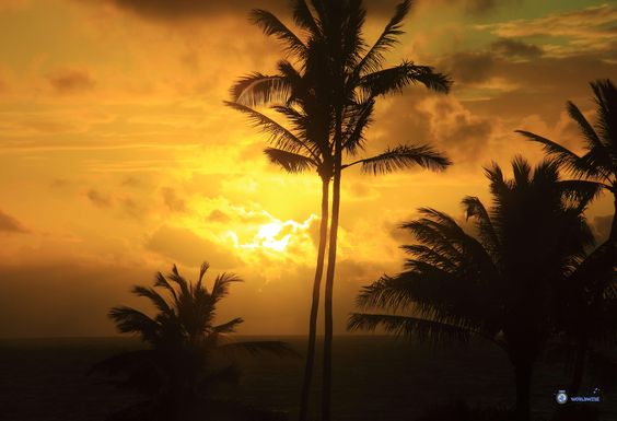 """Kauai is nicknamed """"The Garden Isle"""" for its natural beauty. With so many…"""