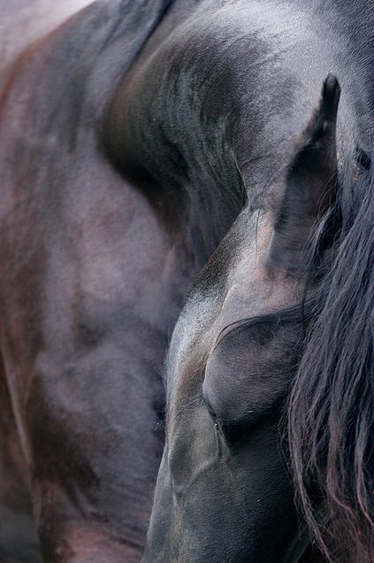 """""""There is something about the outside of a horse that is good for the inside of a man."""" ~ Winston Churchill"""