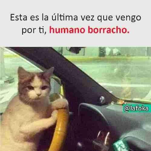 El Humano Borracho Funny Memes Funny Cat Memes Memes