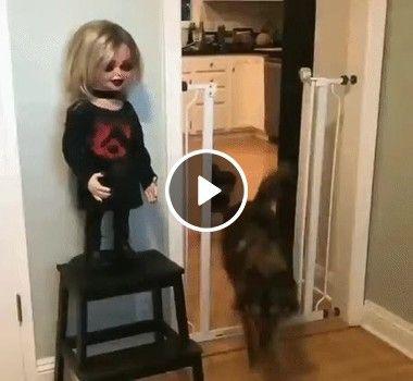 Parece que o cãozinho não gostou muito da nova boneca de sua dona