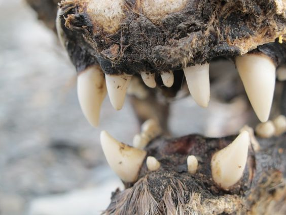 """""""Polar Bear Skull in Svalbard"""" Photo taken by Gus M. #OceanwideExpeditions #PhotoContest"""