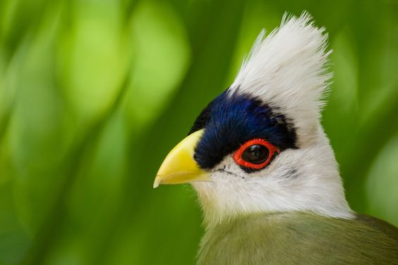 cuckoo bird nest - Google Search