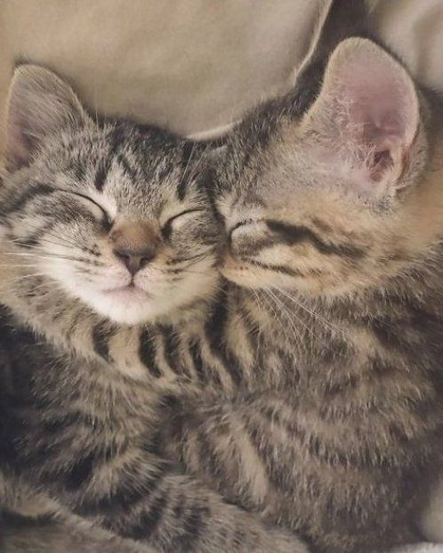 33 Adorable Sleeping Cats Kittens Snoozing The Day Away Gallery Cats Cats Kittens Cat Sleeping