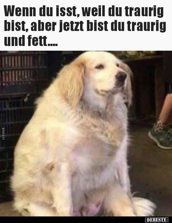 Wenn Du Isst Weil Du Traurig Bist Aber Jetzt Bist Du Lustige Hund Meme Lustige Cartoons Lustige Humor Bilder
