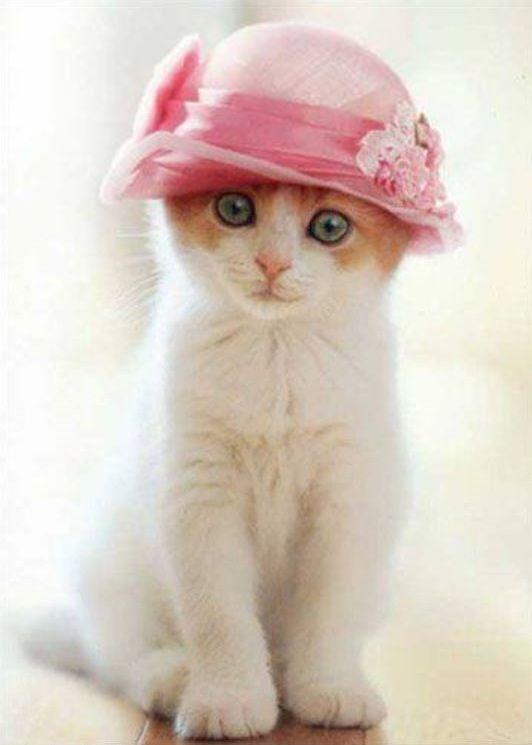 #chat  #cat  #chaton  #kitten  #cute  #mignon  #chapeau  #hat  #rose  #pink  #blanc  #white