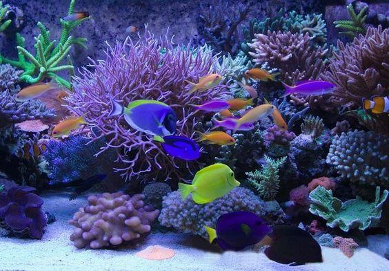 Fancy purple backgrounds aquarium supplies led aquarium for Purple saltwater fish