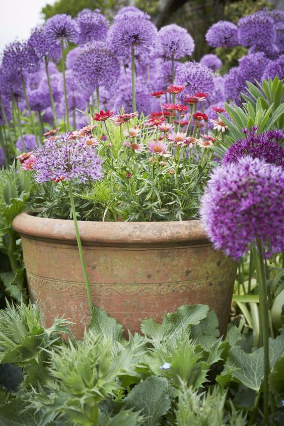 Gardens, Growing Plants And The Purple On Pinterest