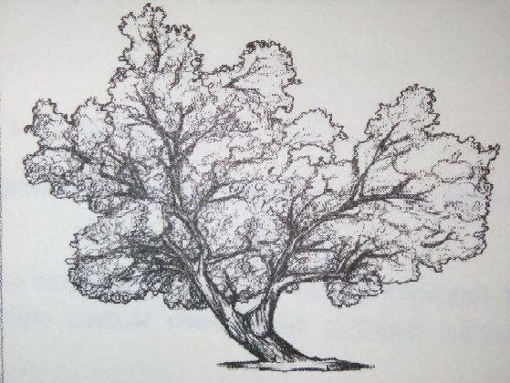 Contoh Soal Psikotes Baum Tree Dan Pembahasannya Menggambar Pohon Pohon Gambar