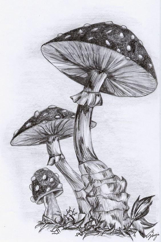 How to draw a mushroom mushrooms by nerissa the vampire for How to draw a mushroom