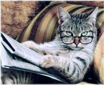 Studious cat reading a newspaper wearing reading glasses ...