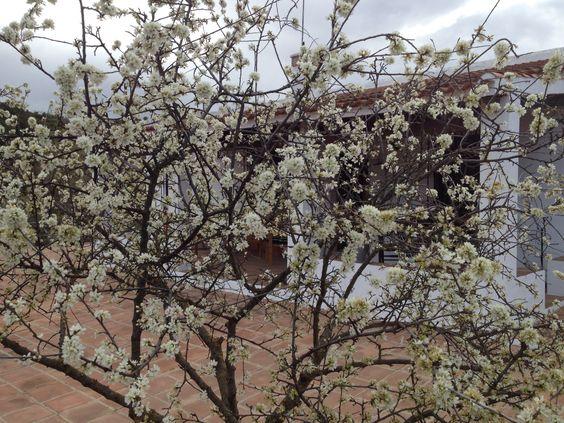 Almendros en flor. Villanueva del rosario (Málaga-Spain)  Fdo: Eugenio Gallego