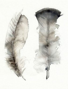 Watercolour feathers