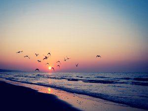 Aves volando sobre una playa al amanecer