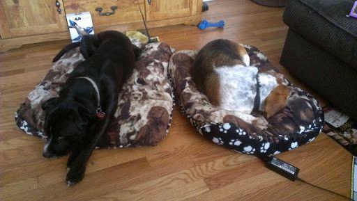 finished crochet felt dog beds