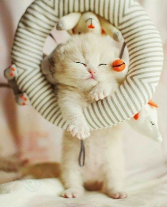 This Swing Made Me A Bit Sleepy Just Gonna Nap Right Here A While Kitten Kittens Cutest Cats And Kittens Cat Lovers